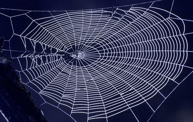 В США испытают армейские бронежилеты из искусственной паутины