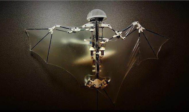 Ученые США создали робота-летучую мышь