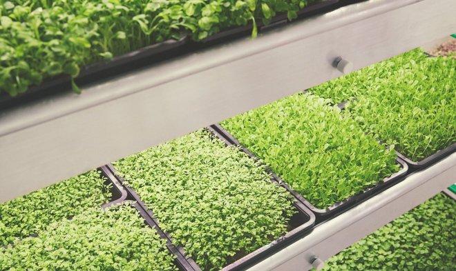Что нужно для выращивания зелени