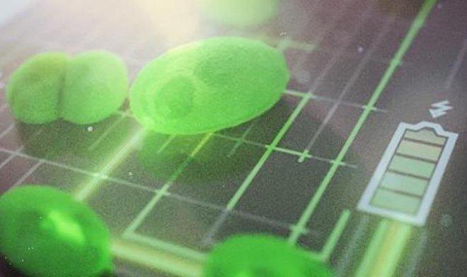В Кембридже разработали сверхэффективную топливную ячейку из водоросли