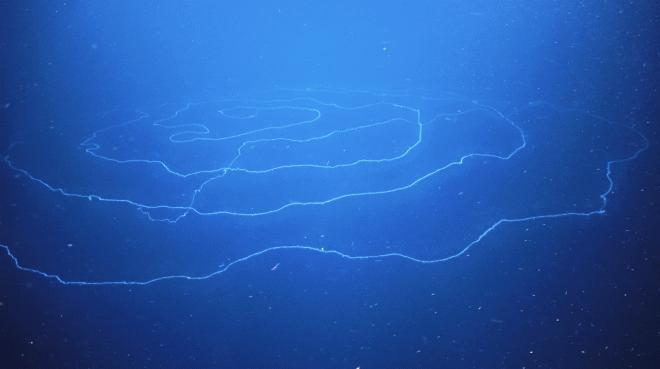 Подводные животные
