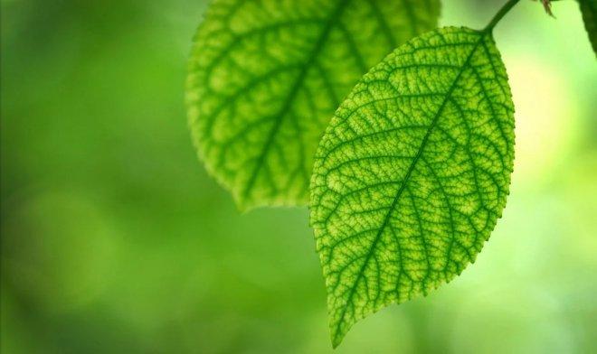 «Искусственный лист» с легкостью превращает воду в водородное топливо