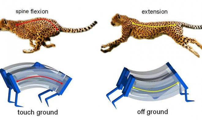 Ученые создали самого быстрого мягкого робота в мире, взяв пример с гепарда
