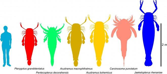 Древний ракоскорпион