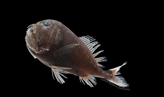 Ультрачерная рыба