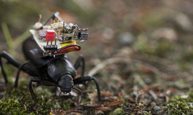 Камера для жука