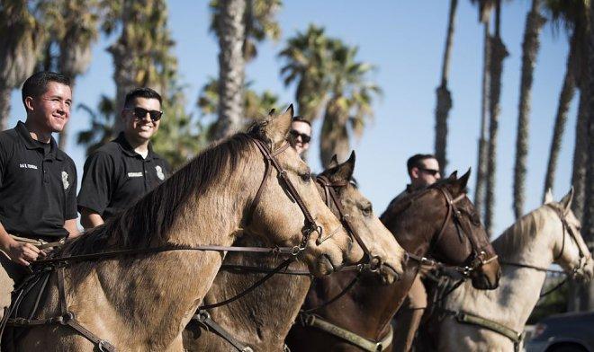 Служебные лошади