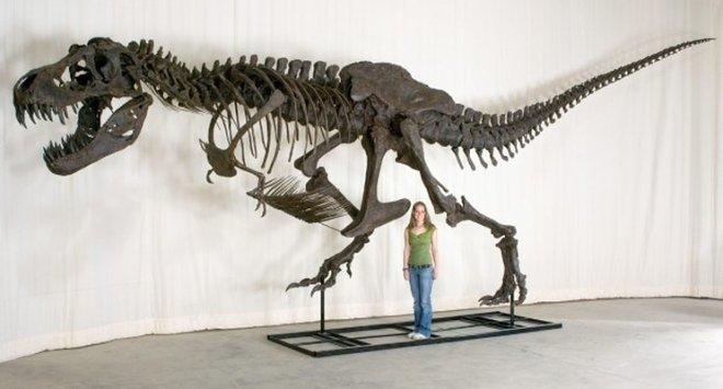 Тираннозавр Стэн