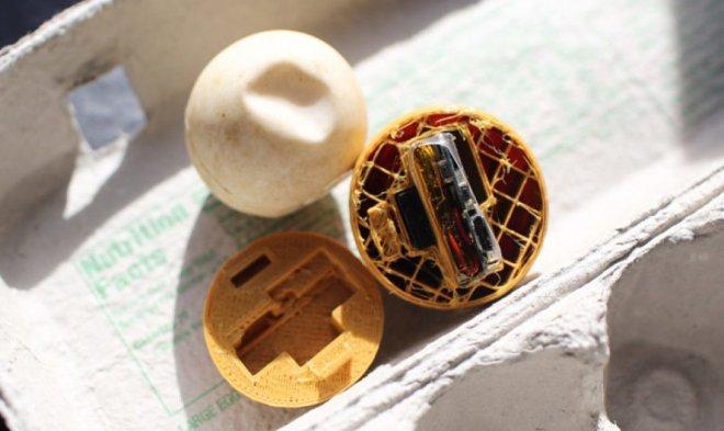 Фальшивые черепашьи яйца с GPS-маячками помогли выявить браконьерскую сеть