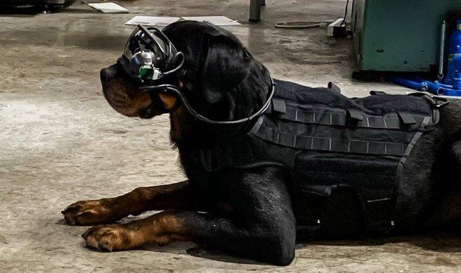 Дополненная реальность для собак
