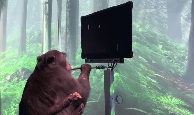 Играющая обезьяна