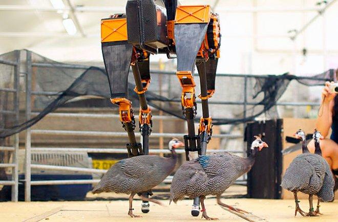 Robot Atrias