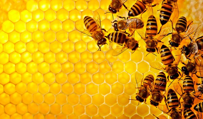 Bees on the way of the drug mafia