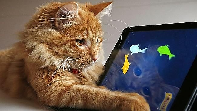 Кошка фото (Сatus)