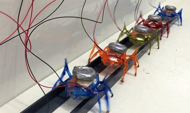 Robots-ants