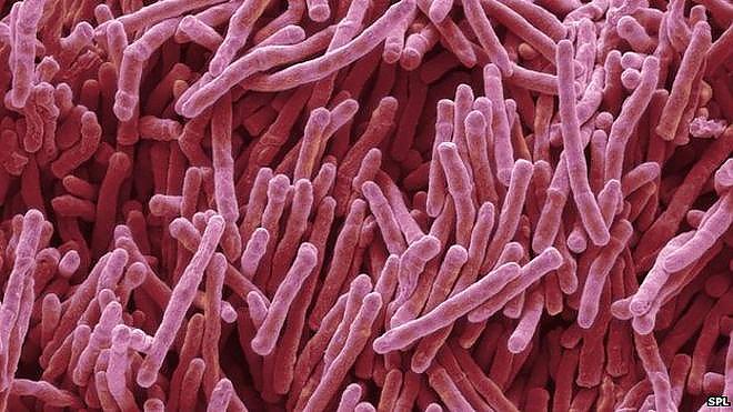 Parents of antibiotics