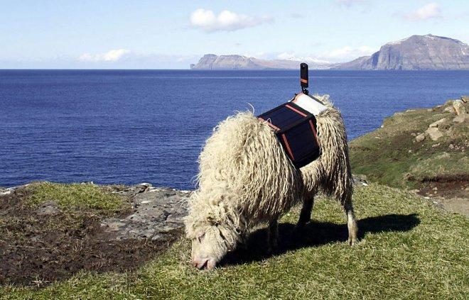 Sheep will help Google