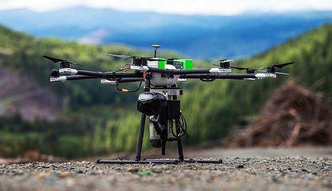 Drones - forest orderlies