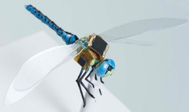 Dragonfly Cyborg DragonflEye