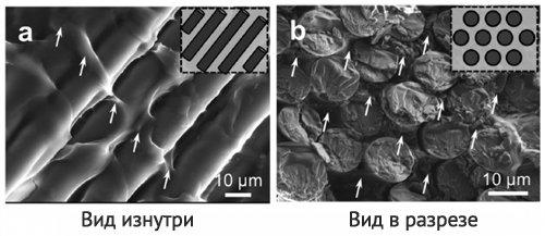Reinforced hydrogel under a microscope