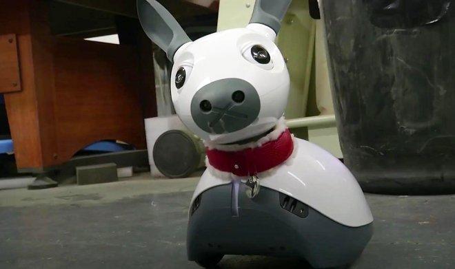 Miro Robot