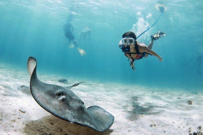 Blu3 Nemo