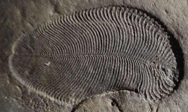 Несколько молекул жира помогли идентифицировать самое древнее животное на Земле