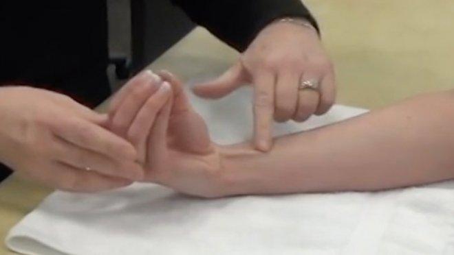 Ладонная мышца