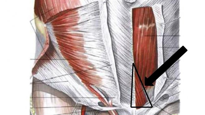 Пирамидальная мышца