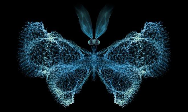 Иммунная система человека использует для эффективной работы теорию хаоса