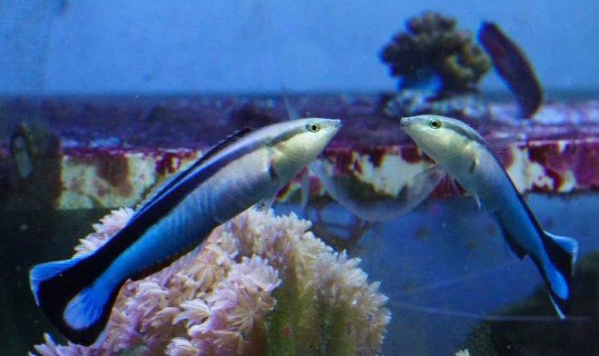 Рыбы впервые в истории прошли тест на самосознание