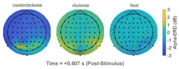 Влияние мозга на магнитные поля
