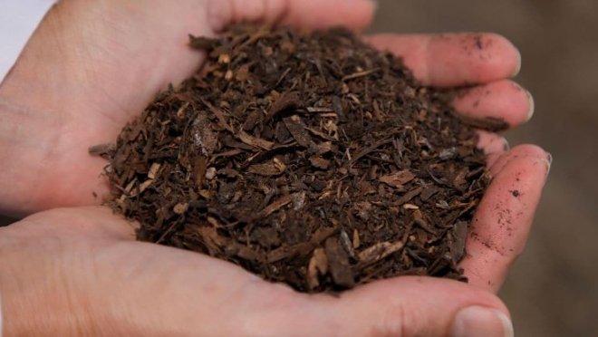 В США приняли проект закона о превращении умерших людей в компост