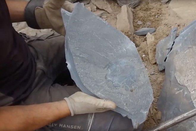 Тысячелетний Сокол