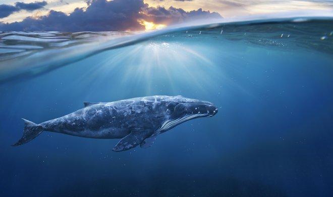 Из доклада МВФ: киты – решение проблемы изменения климата