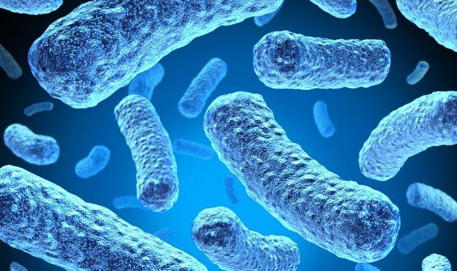 Электробактерии