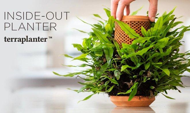 Необычная система Terraplanter позволит выращивать любые растения без почвы