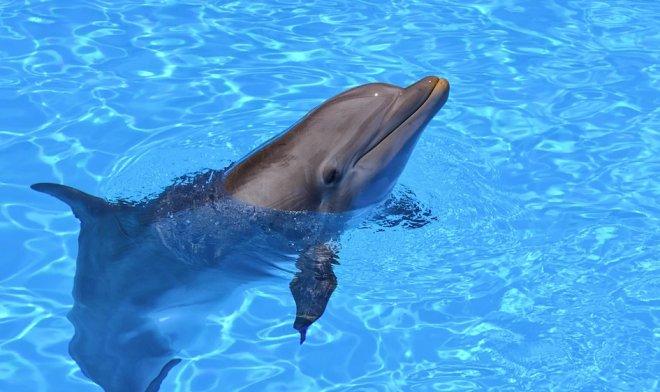 Дельфины-роботы заменят в зоопарках и аквариумах своих живых сородичей
