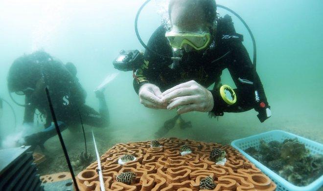 Керамический риф