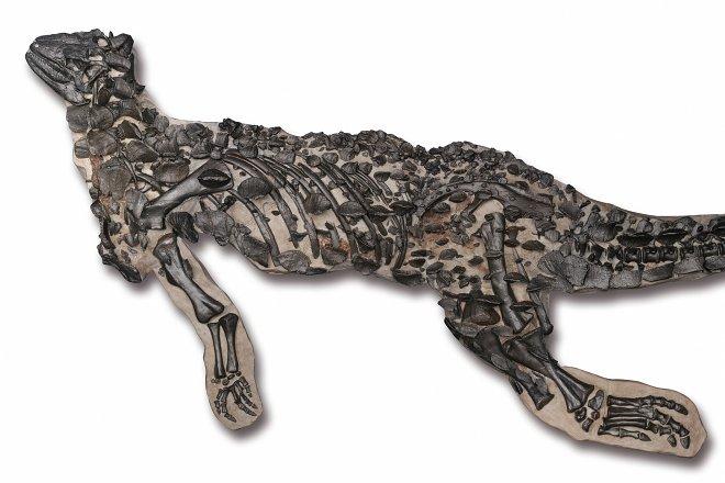 Первый полный скелет динозавра собрали спустя 162 года после находки