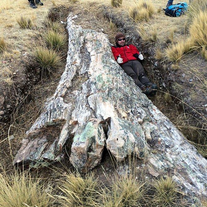 В Андах нашли невероятное дерево возрастом 10 миллионов лет