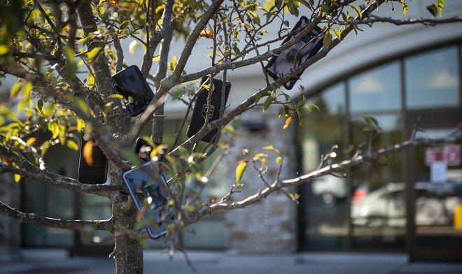 Телефоны на деревьях