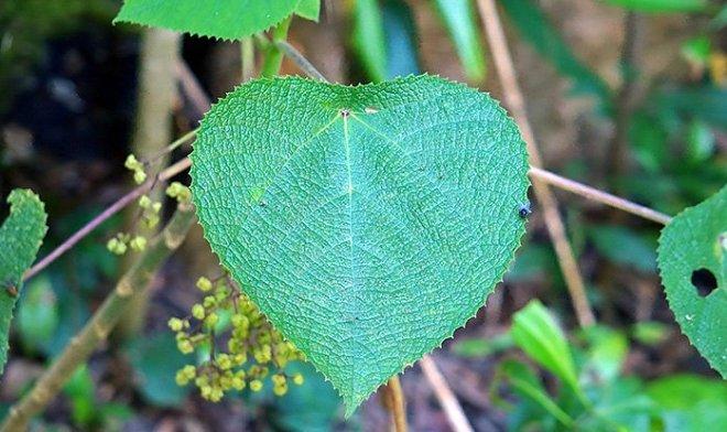 В Австралии найдено растение, яд которого похож на яд скорпионов