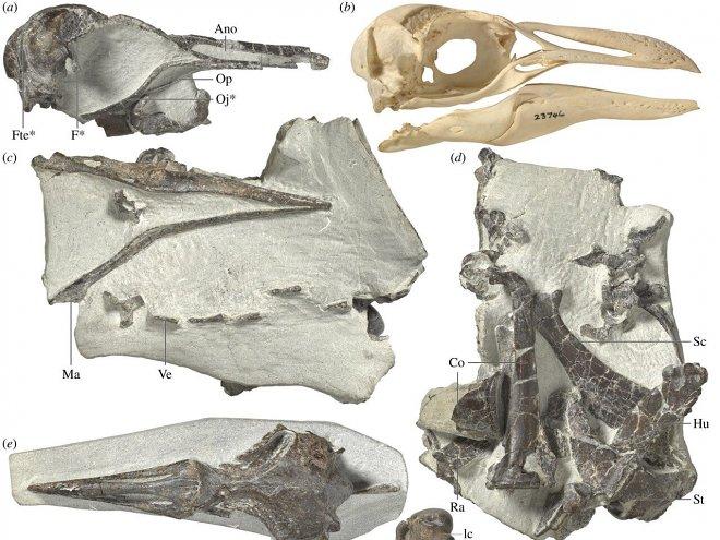 Древние пингвины