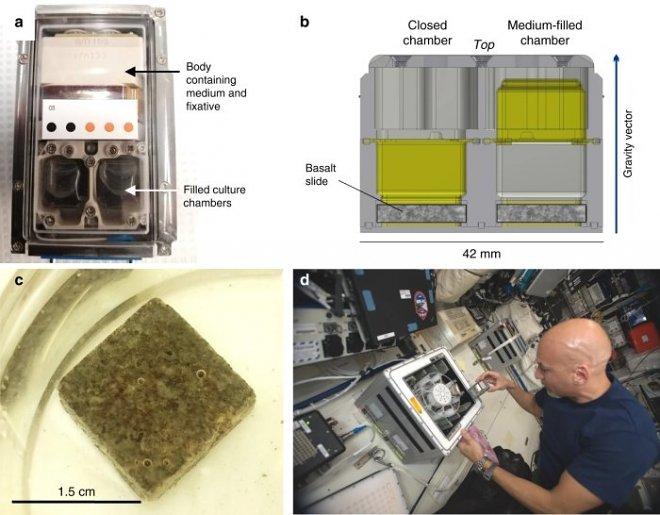 Бактерии оказались невероятно эффективны для добычи металлов из астероидов