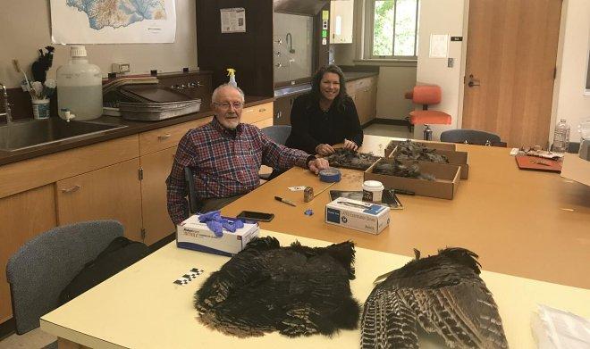 Археологи изучили одеяло из 11500 перьев индейки, изготовленное древними пуэбло