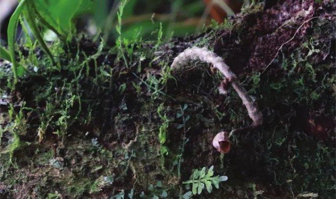 Британские ботаники нашли самую уродливую орхидеюв мире