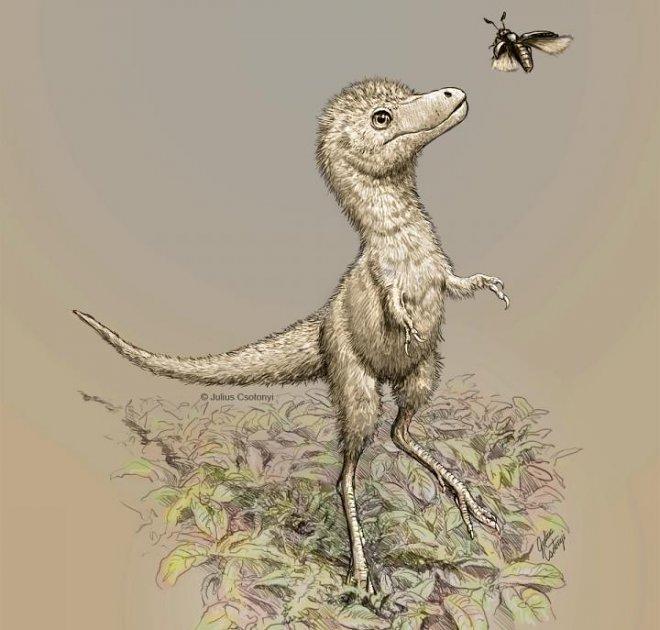 Новорожденные тираннозавры появлялись на свет размером с собаку