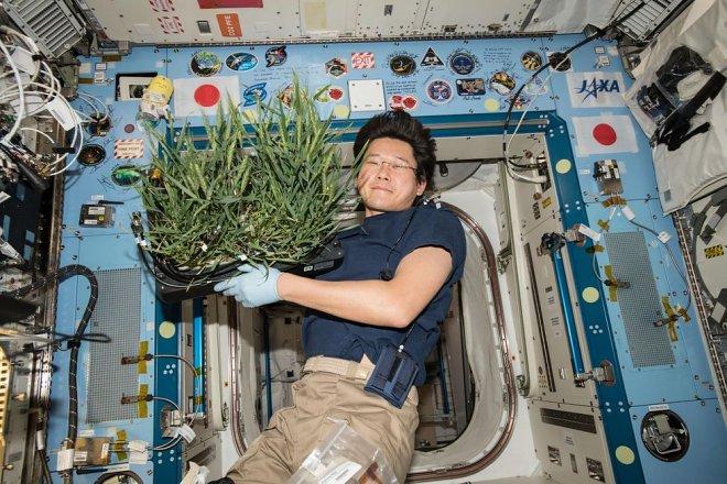 NASA готово заплатить 0 000 за новые идеи космической еды